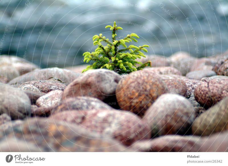 kleines bäumchen Natur Wasser grün Baum Landschaft Stein Fluss Norwegen Tannennadel