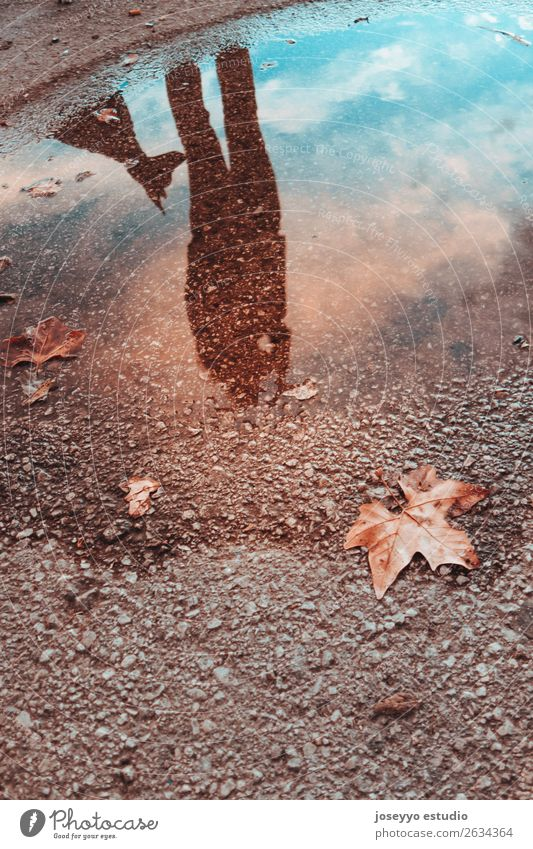 Spiegelbild in einer Pfütze einer Frau mit ihrem Hund Lifestyle schön Winter Mensch Freundschaft Erwachsene Tier Himmel Herbst Unwetter Regen Blatt Liebe dunkel