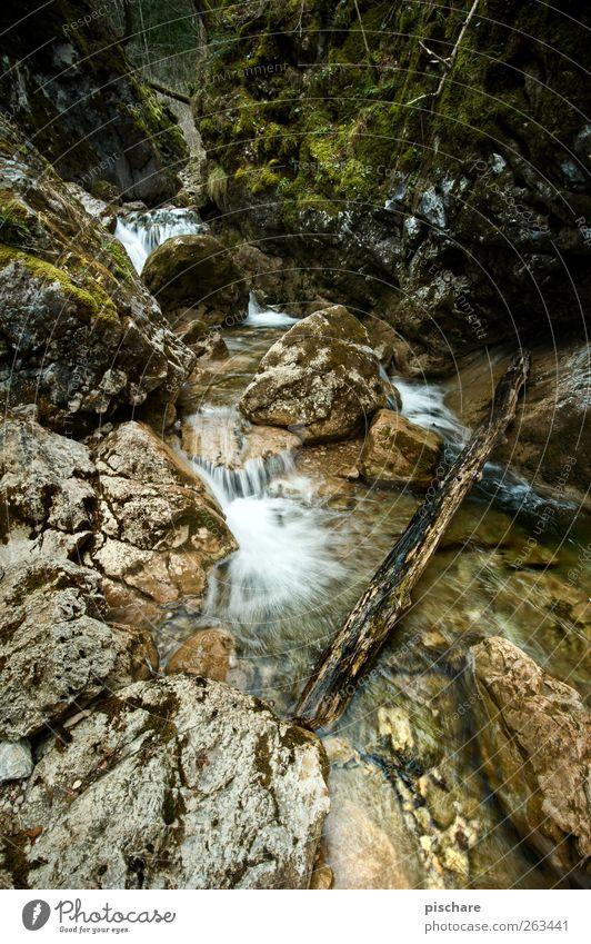 Natur mit Diplom Natur Wasser Landschaft Felsen Moos Bach