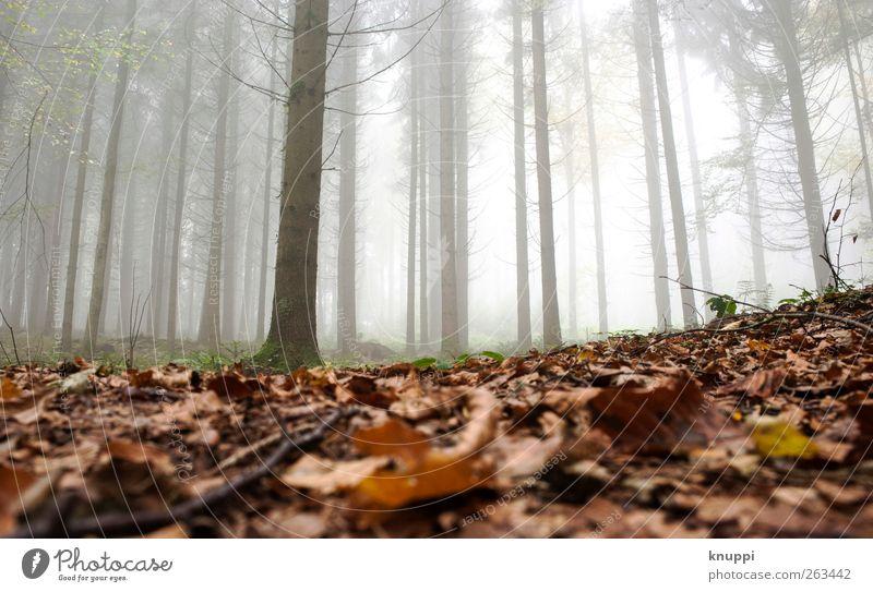 morgens im Nebel Erholung ruhig Landwirtschaft Forstwirtschaft Natur Pflanze Herbst Schönes Wetter Baum Blatt Wald dehydrieren braun grün weiß Nebelwald