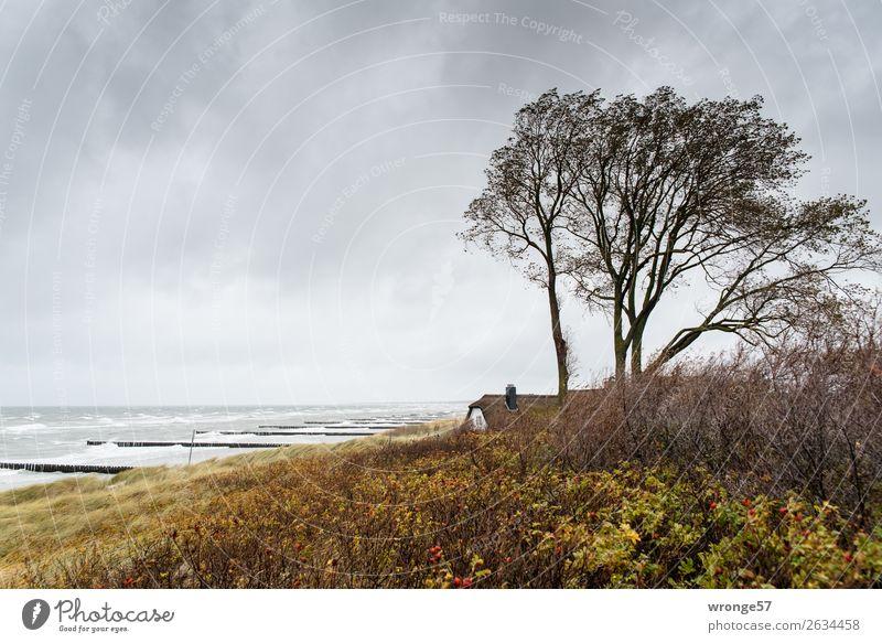 Haus am Meer Ferne Strand Wellen Natur Himmel Wolken Horizont Herbst Wind Sturm Küste Ostsee maritim wild braun gelb grau Fischland Holzpfahl Düne Regenwolken