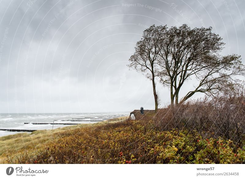 Haus am Meer Himmel Natur Wolken Ferne Strand Herbst gelb Küste braun grau wild Horizont Wellen Wind