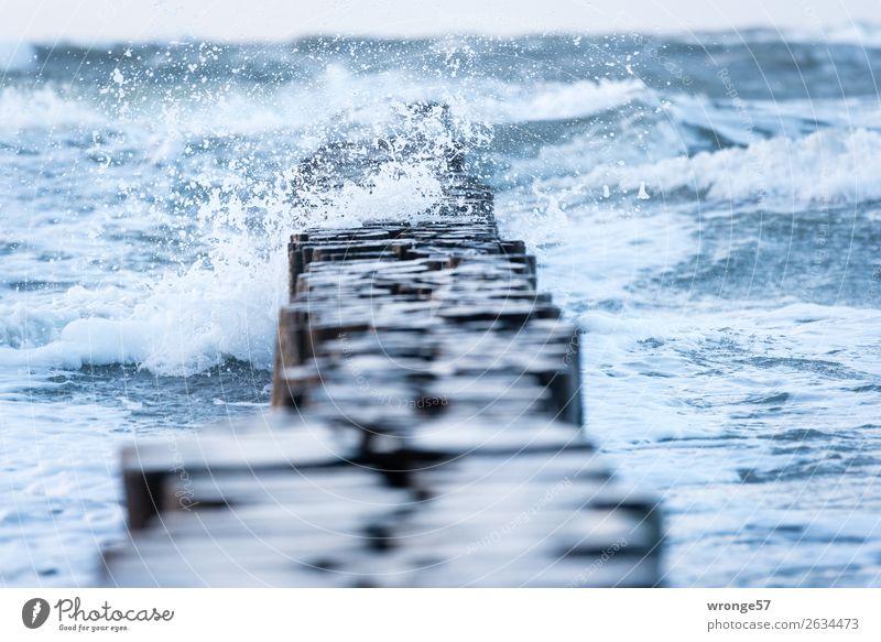 Spritzig Umwelt Natur Wasser Herbst schlechtes Wetter Wind Sturm Regen Wellen Küste Ostsee maritim nass blau braun Holzpfahl Meer spritzen Wellengang enthemmt