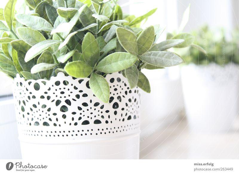 Natur in Kelchen. Natur grün weiß schön Pflanze Blatt Frühling Stil Hintergrundbild Kraft natürlich Wachstum authentisch Dekoration & Verzierung Hoffnung einfach