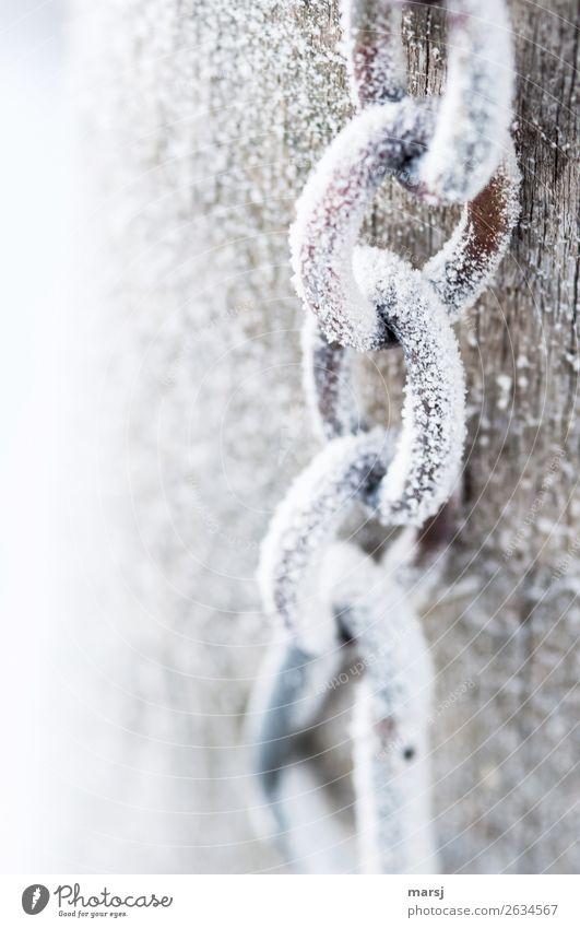 Gefrorene Kette Winter Eis Frost Kettenglied Metall Stahl kalt gefroren weiß Eiskristall Farbfoto Gedeckte Farben Außenaufnahme Nahaufnahme Menschenleer