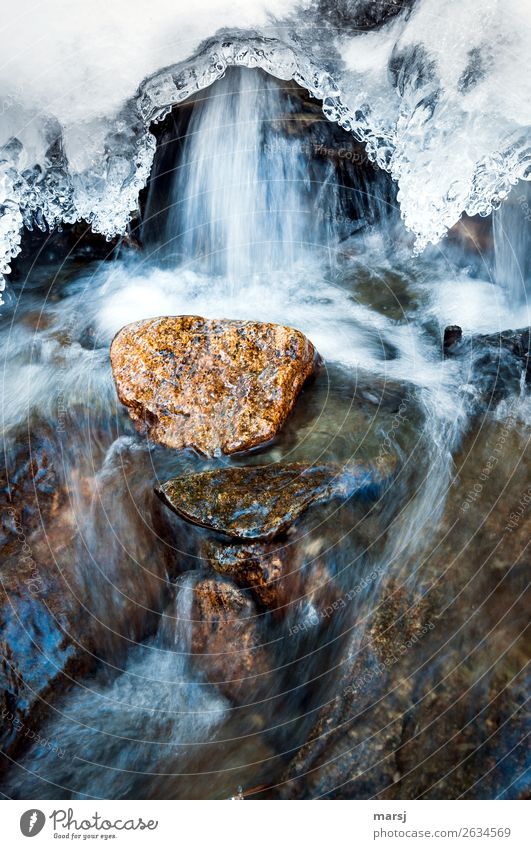 Verwandlung | Eis zu Wasser Leben Natur Frühling Frost Bach Stein kalt natürlich Reinheit Traurigkeit Beginn Bewegung Leichtigkeit träumen Überleben