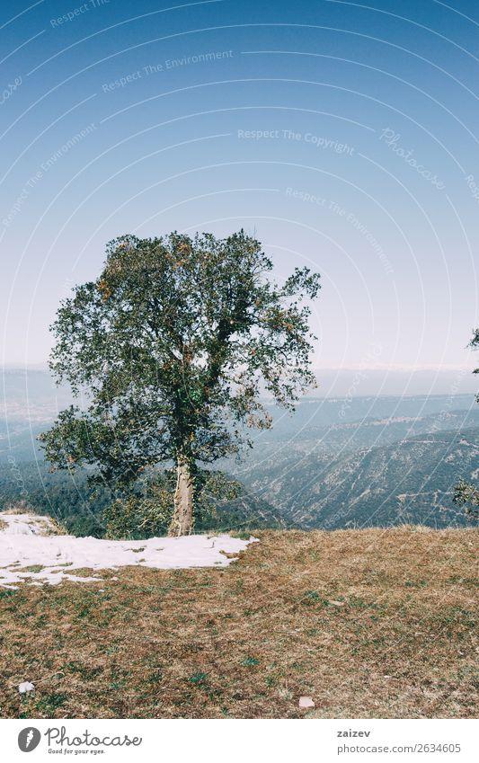 Ferien & Urlaub & Reisen Natur Farbe schön Landschaft weiß Baum Blatt Wald Winter Berge u. Gebirge dunkel Straße Umwelt natürlich Wege & Pfade