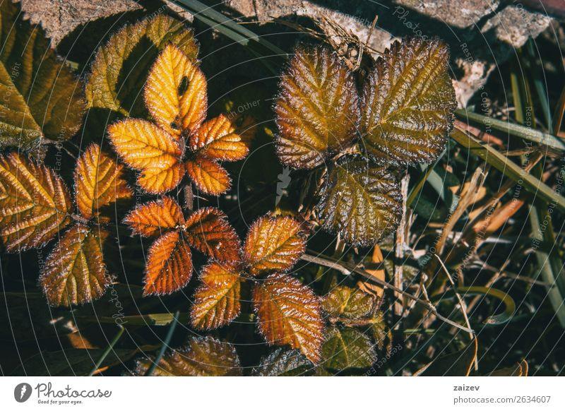 Natur Pflanze Farbe schön grün Blatt ruhig Wald Winter Berge u. Gebirge dunkel schwarz Herbst gelb natürlich Garten
