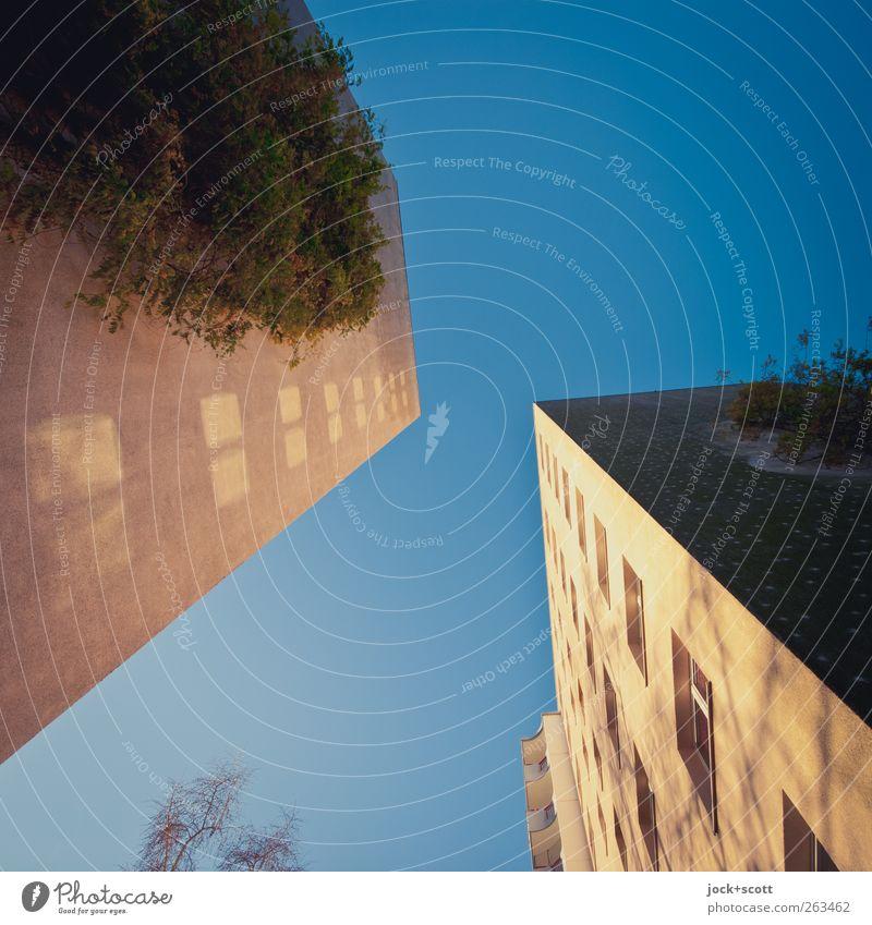 Plattenromantik im Quadrat Wolkenloser Himmel Winter Schönes Wetter Efeu Marzahn Plattenbau Fassade eckig modern Detailaufnahme Strukturen & Formen