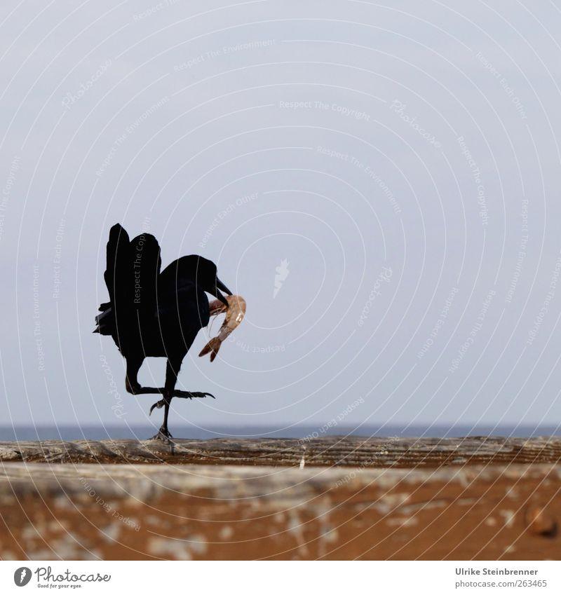 Geschafft! Meer Freude Tier Vogel gehen Wildtier Tierfuß Erfolg Brücke stehen Feder Mut Anlegestelle Fressen frech Schnabel