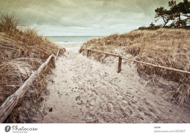 Ein Wiedersehen Umwelt Natur Landschaft Urelemente Sand Wasser Himmel Wolken Horizont Winter Klima Wetter Gras Wellen Küste Strand Ostsee Meer Wege & Pfade