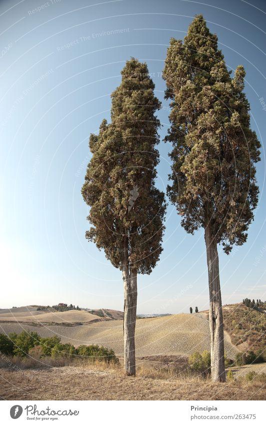 Zweisamkeit - Toskana pur Baum Sommer ruhig Landschaft Herbst Zufriedenheit Hügel Unendlichkeit Schönes Wetter