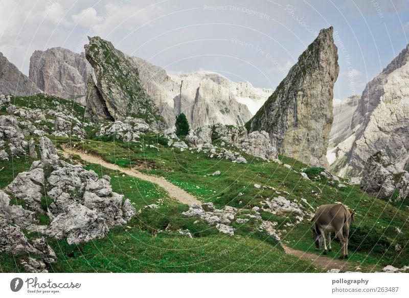 auf abwegen Himmel Natur grün Baum Pflanze Ferien & Urlaub & Reisen Sommer Tier Wolken Landschaft Wiese Berge u. Gebirge Freiheit Gras Wege & Pfade Stein