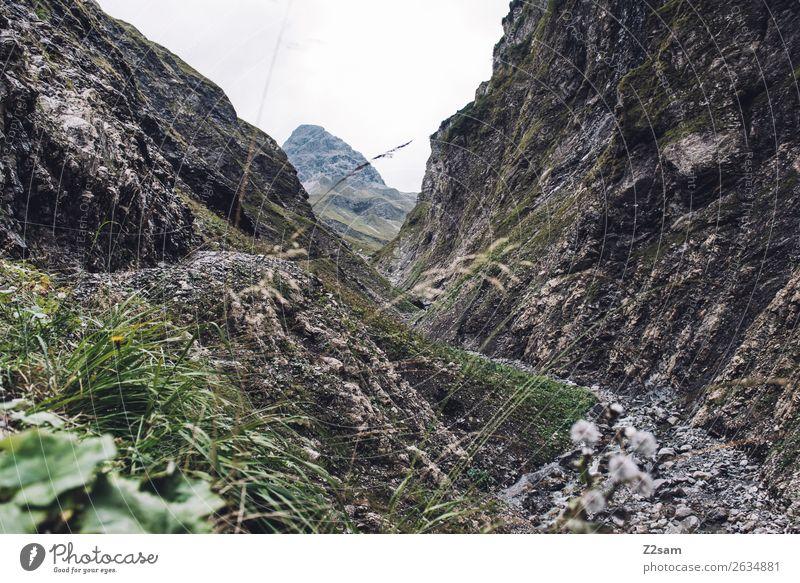 Aufstieg zur Kemptner Hütte wandern Natur Landschaft Sträucher Alpen Berge u. Gebirge Gipfel gigantisch grün Einsamkeit Abenteuer Beginn anstrengen Erholung
