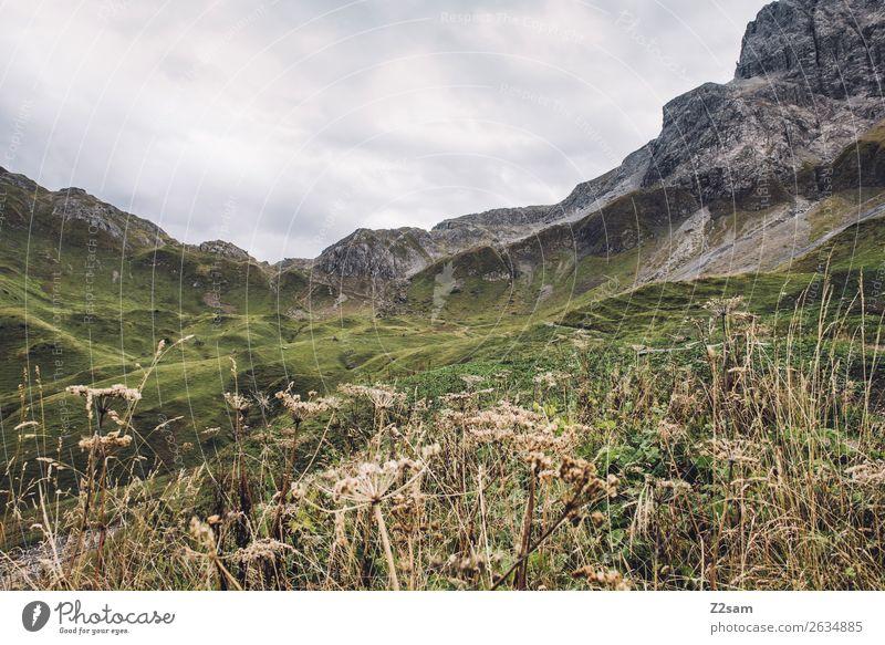 Aufstieg zum Mädlejoch im Allgäu Berge u. Gebirge wandern Natur Landschaft schlechtes Wetter Sträucher Wiese Alpen Gipfel gigantisch hoch natürlich grün