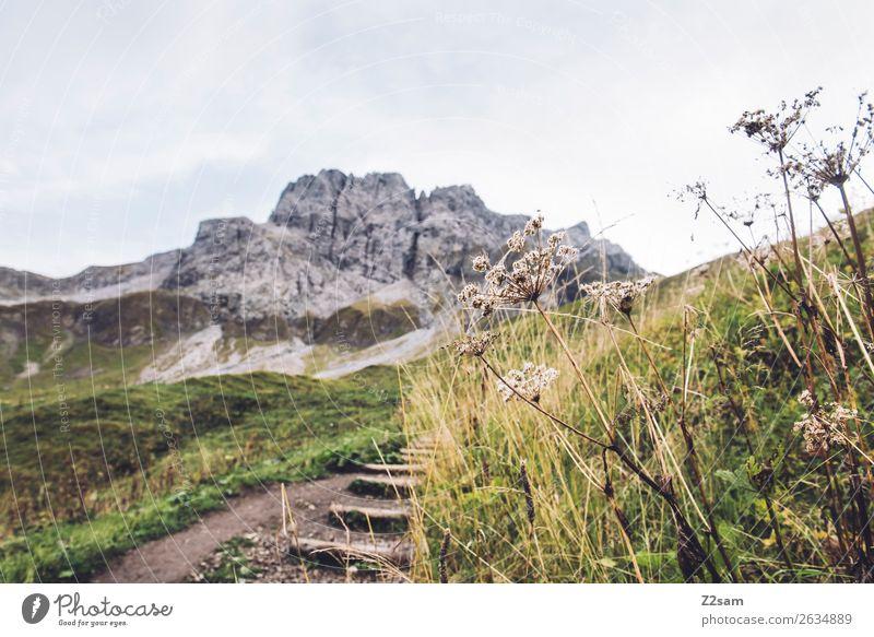 Aufstieg zum Mädlejoch wandern Natur Landschaft Herbst Schönes Wetter Sträucher Wiese Alpen Berge u. Gebirge gigantisch hoch grün Abenteuer Erholung