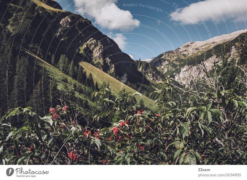Alpenpanorama Lechtaler Alpen Abenteuer wandern Natur Landschaft Sträucher Blüte Wald Berge u. Gebirge ästhetisch natürlich blau grün Einsamkeit Idylle