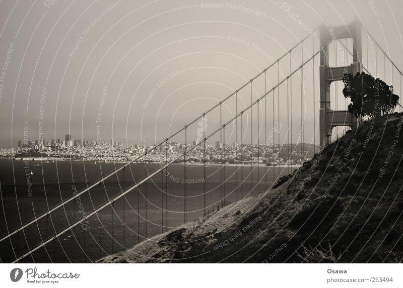 Golden Gate Wasser Stadt Baum Meer Landschaft Brücke USA Hügel Stahlkabel Konstruktion Sehenswürdigkeit Sightseeing Kalifornien Querformat Drahtseil Stahlkonstruktion