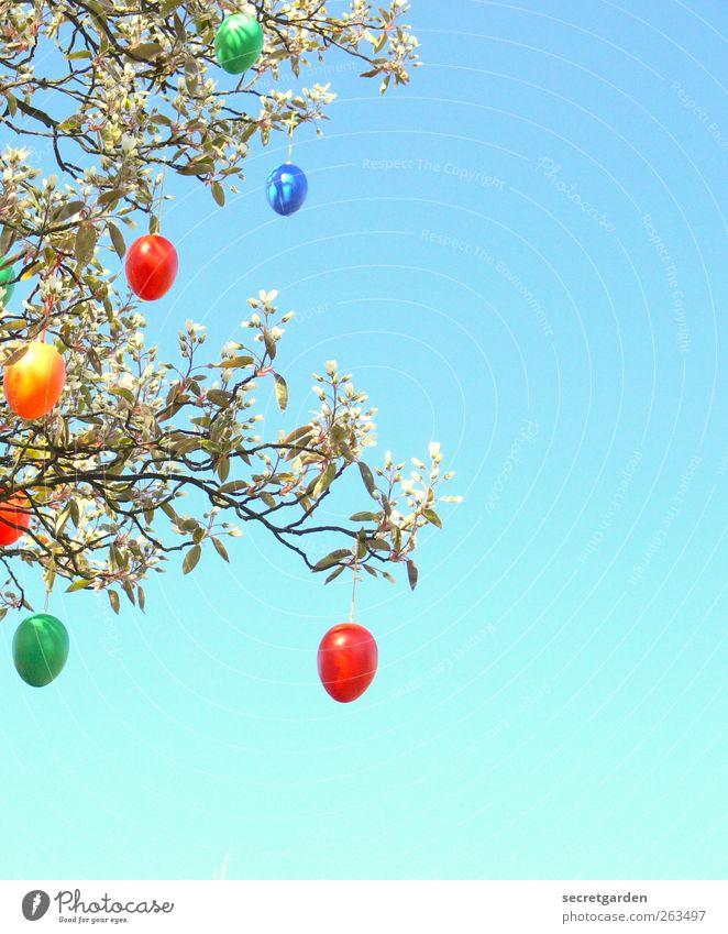 fröhliches Ostereiersuchen. blau grün Baum rot Pflanze gelb Sträucher Ostern Kitsch Krimskrams
