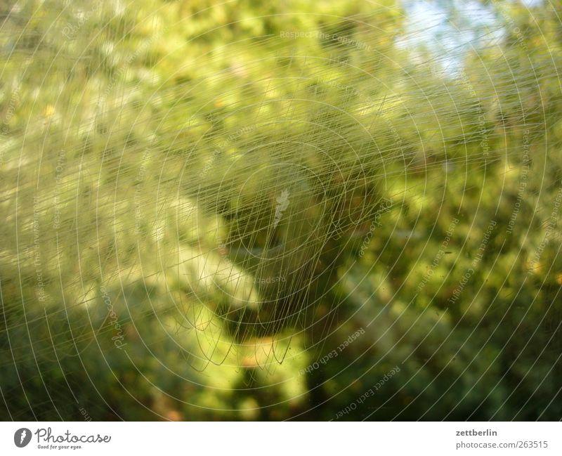 Kratzer Natur Pflanze Sommer Wald Umwelt Glas kaputt Fensterscheibe Scheibe Glasscheibe Vandalismus zerkratzen gekratzt