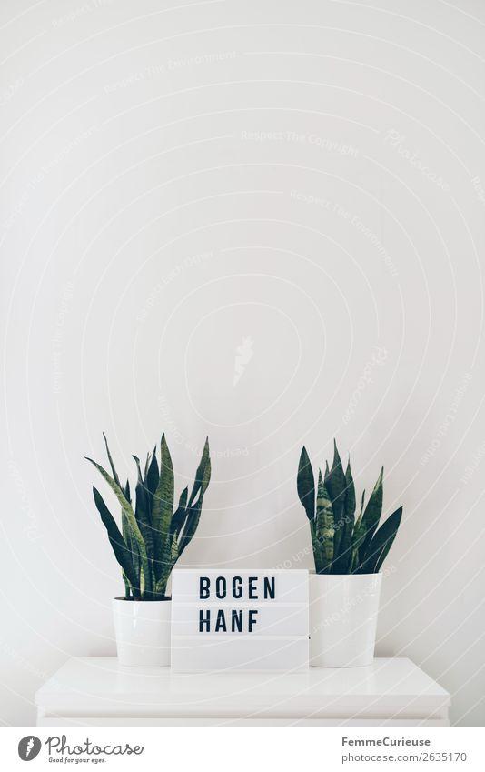 Two snake plants on white chest of drawers Lifestyle Stil Häusliches Leben Wohnung Natur Bogenhanf Blumentopf Pflanze 2 Grünpflanze Zimmerpflanze Leuchtbox