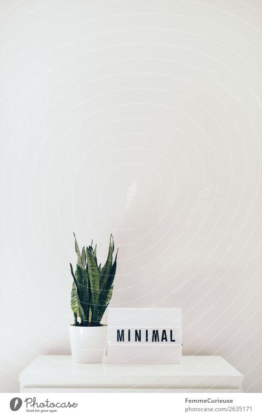 Snake plant & light box on white sideboard Pflanze Häusliches Leben minimalistisch Bogenhanf snake plant Leuchtkasten Kommode weiß Blumentopf leer Grünpflanze