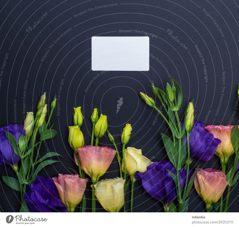 Natur Sommer Pflanze blau grün weiß Blume Blatt schwarz gelb Liebe Blüte natürlich Feste & Feiern Textfreiraum rosa
