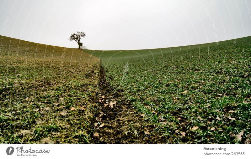 # 300 - entlang der Grenze Umwelt Natur Landschaft Pflanze Erde Luft Himmel Wolken Horizont Frühling Wetter schlechtes Wetter Baum Gras Wiese Feld Hügel stehen