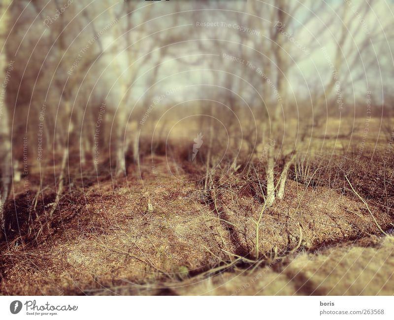 Ipweger Moor Natur Landschaft Pflanze Erde Winter Sträucher Birkenwald Feld Wald Sumpf Moorbirke Oldenburg Bundesadler Europa Stadtrand Menschenleer Gefühle