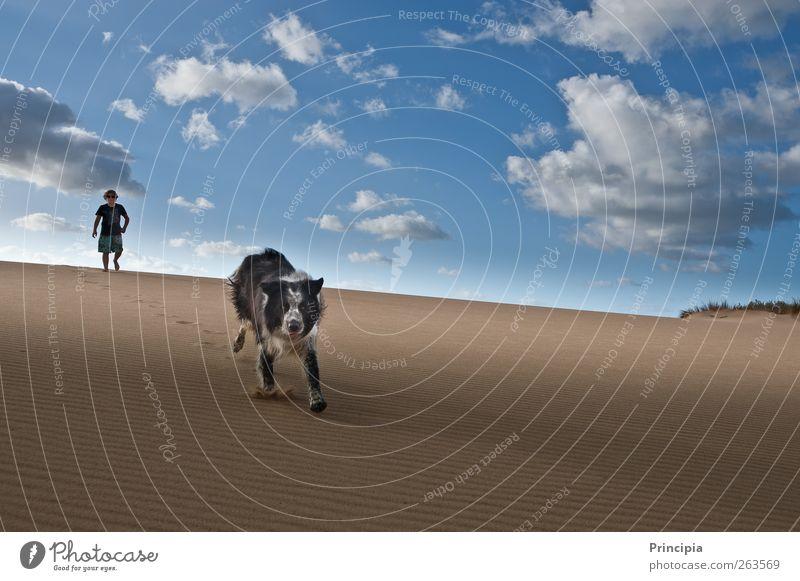 auf der Düne Landschaft Himmel Sommer Wüste Hund rennen Lebensfreude Freiheit Tourismus Ferien & Urlaub & Reisen Farbfoto Außenaufnahme Textfreiraum rechts Tag