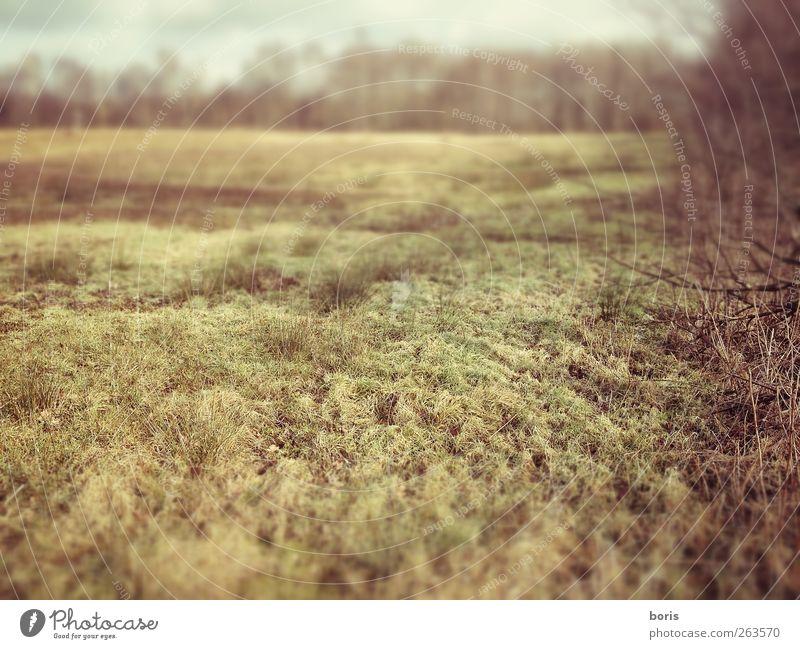 Ipweger Moor Natur Landschaft Pflanze Winter Gras Sträucher Feld Oldenburg Bundesadler Europa Menschenleer ästhetisch braun gelb grau Sehnsucht Einsamkeit kalt