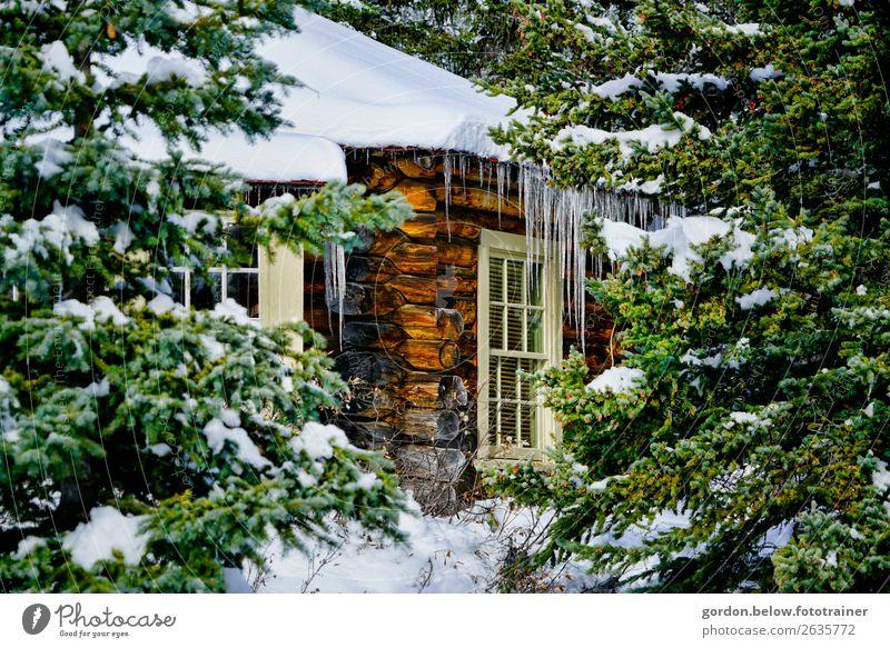 Winter in Kanada Natur Pflanze Urelemente Eis Frost Schnee Baum Wald Menschenleer Traumhaus Mauer Wand Fenster Dach Holz Unendlichkeit kalt blau braun grau grün