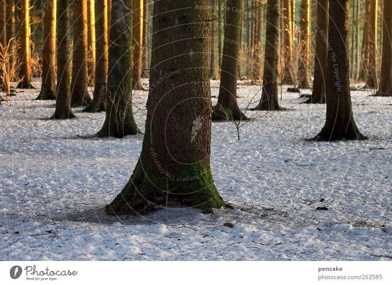 die einen stehn im licht Natur Landschaft Sonnenaufgang Sonnenuntergang Winter Klima Schnee Baum Wald Stimmung Frühlingsgefühle Vorfreude Naturschutzgebiet