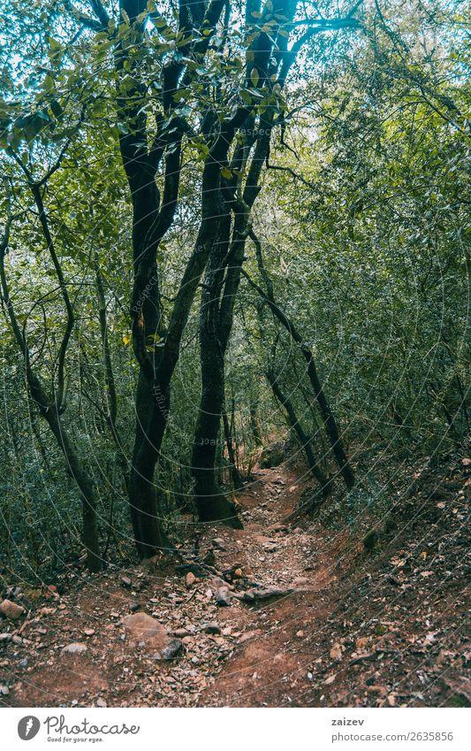Schmale Straße über den Berg, umgeben von einer schön Ferien & Urlaub & Reisen Tourismus Abenteuer Berge u. Gebirge wandern Umwelt Natur Landschaft Pflanze Erde