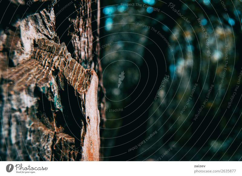 Nahaufnahme von Kiefernrinde in der Natur Design Haut Tapete Umwelt Pflanze Baum Wald Holz alt dunkel natürlich braun Farbe Kreativität Rinde Oberfläche