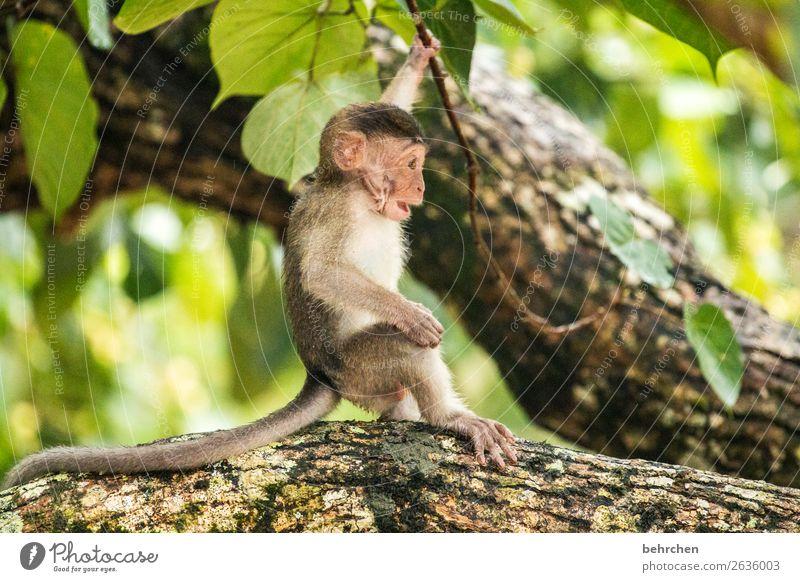 so schützenswert Ferien & Urlaub & Reisen Baum Tier Blatt Ferne Tierjunges natürlich klein Tourismus außergewöhnlich Freiheit Ausflug Wildtier Abenteuer
