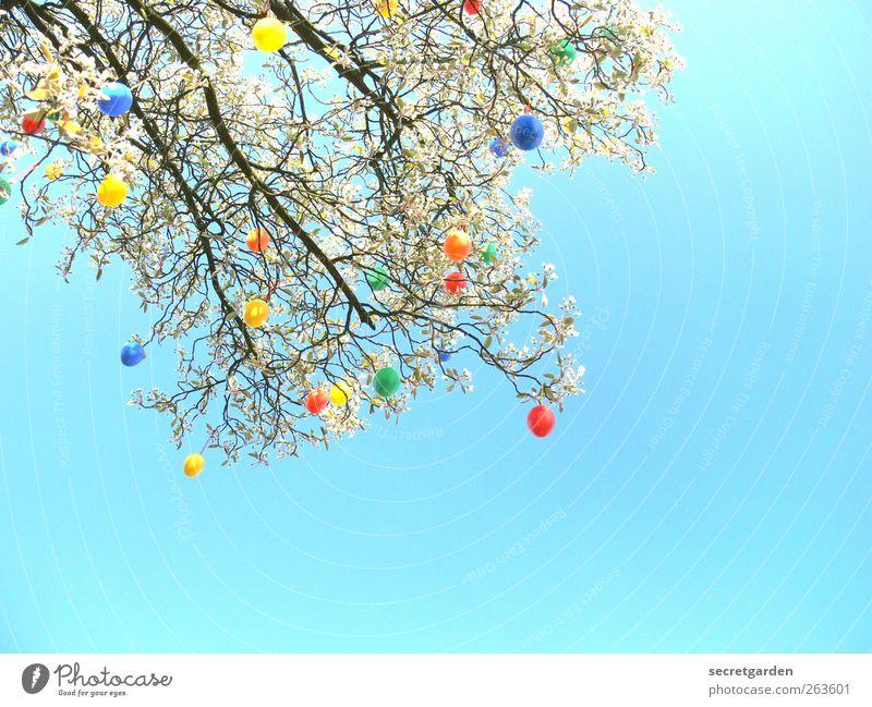 ei like it. Natur blau grün Baum rot gelb Frühling Garten Feste & Feiern Wohnung glänzend Fröhlichkeit Dekoration & Verzierung Sträucher viele Ostern