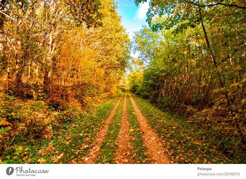 Herbstlaub, das im Herbst auf einen Waldweg fällt. schön Sonne Umwelt Natur Landschaft Baum Blatt Park Straße Wege & Pfade hell natürlich gelb gold grün rot