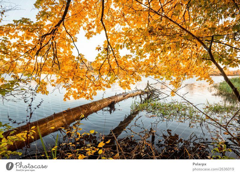 Holzblock, der im Herbst über einem See hängt. schön Ferien & Urlaub & Reisen Umwelt Natur Landschaft Himmel Baum Blatt Park Wald Teich Fluss hell braun gelb