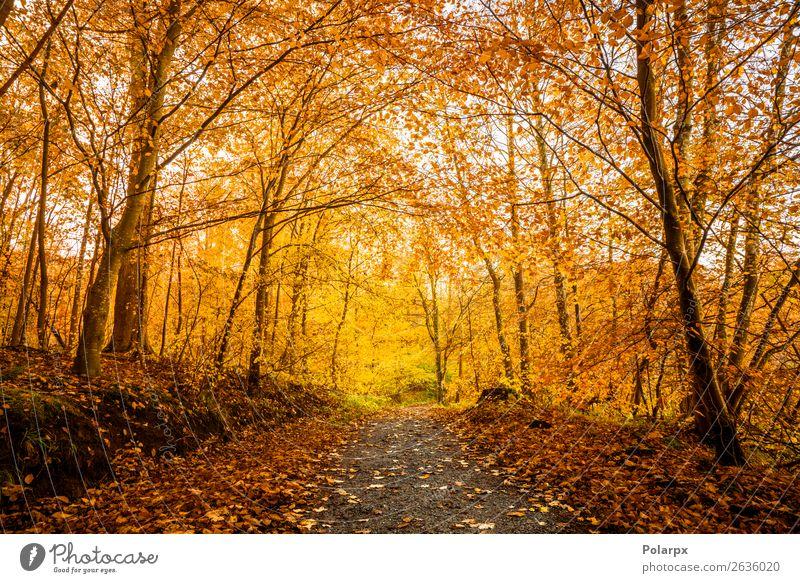 Orangefarbene Herbstfarben im Wald schön Sonne Umwelt Natur Landschaft Baum Blatt Park Straße Wege & Pfade hell natürlich gelb gold grün rot Farbe fallen