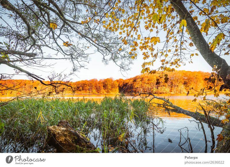 Bunte Bäume an einem See im Herbst schön Ferien & Urlaub & Reisen Umwelt Natur Landschaft Himmel Baum Blatt Park Wald Teich Fluss hell braun gelb gold grün rot