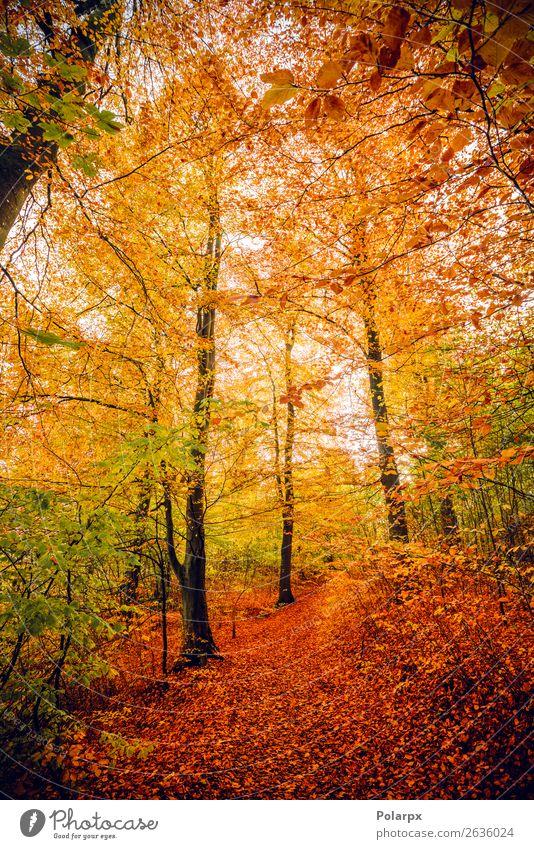 Herbstfarben im Wald mit Bäumen schön Sonne Umwelt Natur Landschaft Baum Blatt Park Straße Wege & Pfade hell natürlich gelb gold grün rot Farbe fallen