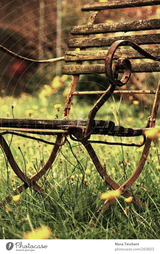 Herzensstück Ferien & Urlaub & Reisen Garten Dekoration & Verzierung Möbel Stuhl Umwelt Natur Pflanze Frühling Sommer Herbst Blume Gras Löwenzahn Park Wiese