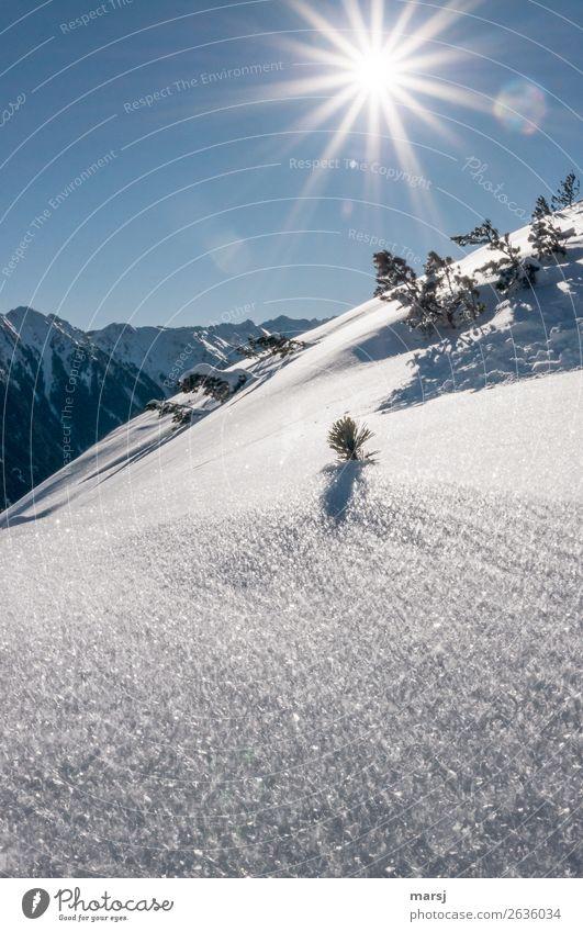 Winterzauber Ferien & Urlaub & Reisen Natur blau weiß Sonne Berge u. Gebirge Leben Beleuchtung Schnee Tourismus Freiheit Ausflug leuchten Eis Idylle