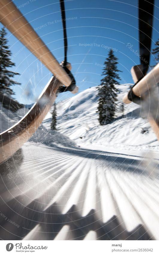 Und jetzt mit Vollgas weiter! Ferien & Urlaub & Reisen Tourismus Abenteuer Winter Schnee Winterurlaub Rodel Rodelbahn Rodeln Natur kalt sportlich blau