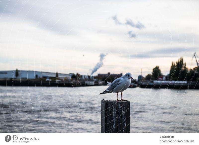 Vogel als Pfahlsitzer Natur Stadt Wasser Sonne Tier Einsamkeit ruhig Leben Herbst Umwelt kalt Küste klein hell Wildtier