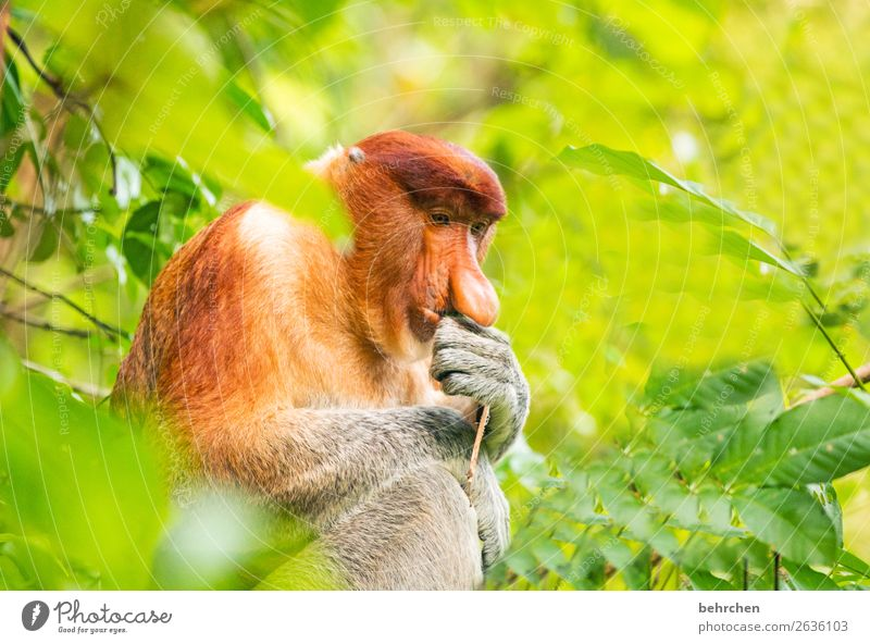 cogito ergo sum Ferien & Urlaub & Reisen schön Tier Ferne Tourismus außergewöhnlich Freiheit Ausflug wild frei nachdenklich Wildtier Abenteuer fantastisch