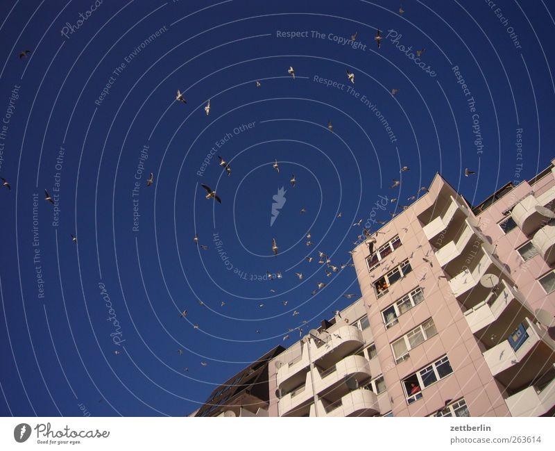 Vögel füttern Himmel Stadt Haus Fenster Spielen Berlin Architektur Gebäude Vogel Freizeit & Hobby Hochhaus Bauwerk Stadtzentrum Hauptstadt Schwarm