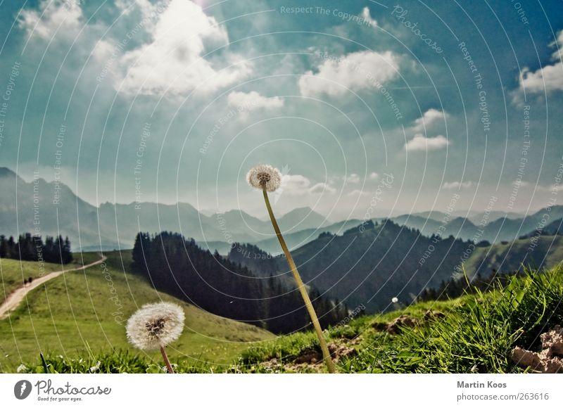 Weit Natur Landschaft Himmel Wolken Pflanze Blume Löwenzahn Wiese Hügel Felsen Berge u. Gebirge Wege & Pfade genießen leuchten verblüht wandern ästhetisch frei
