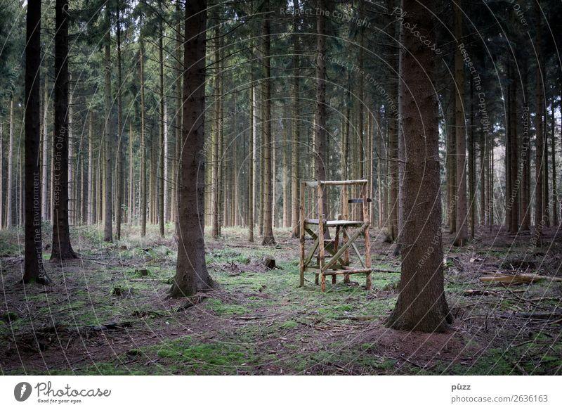 HOCHsitz Umwelt Natur Landschaft Tier Baum Tanne Fichte Fichtenwald Nadelwald Wald Jagd sitzen warten bedrohlich dunkel braun grün träumen Tod Angst Jagdrevier